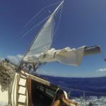 Mahi speed! 7 knots.